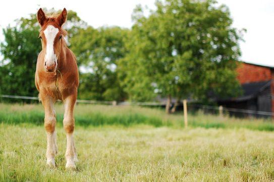 maty dla koni